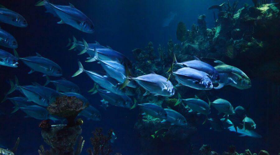 fish stocks